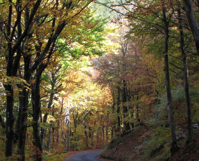 Les Cévennes : châtaigniers en automne